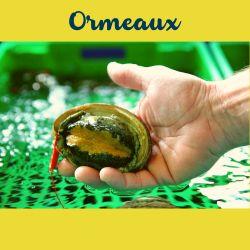 Ormeaux de la Baie de Saint Brieuc
